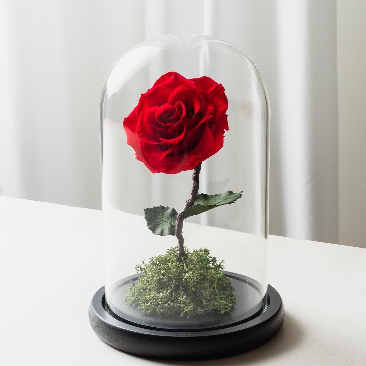 紅色永生玫瑰花玻璃罩封面-喜歡生活乾燥花店-1