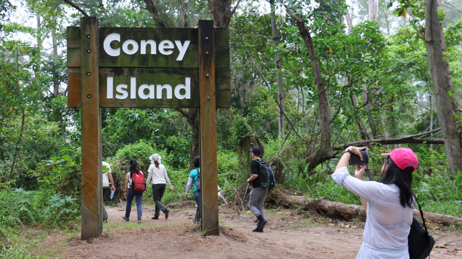 ry-coney-island-10-data.jpg