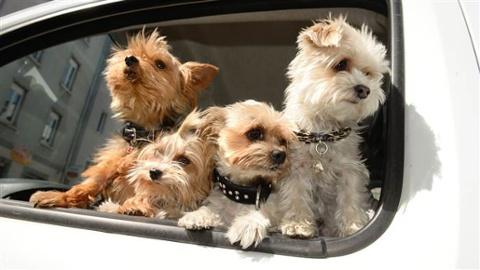 20170824-dogs-in-car.jpg