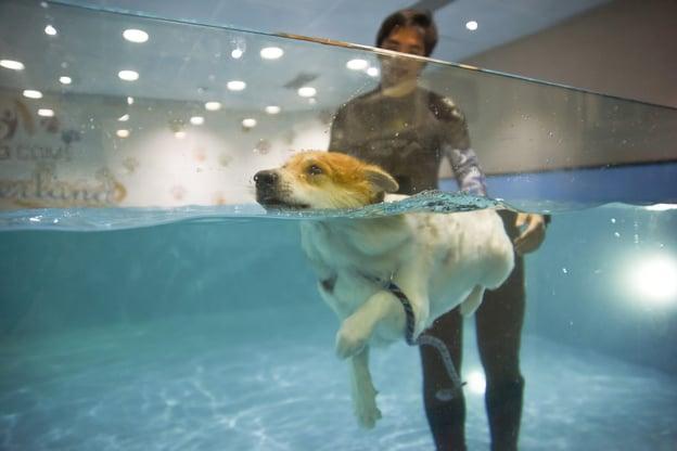 LalamoveBlog_June_02_Indoor Swimming Pool.jpg