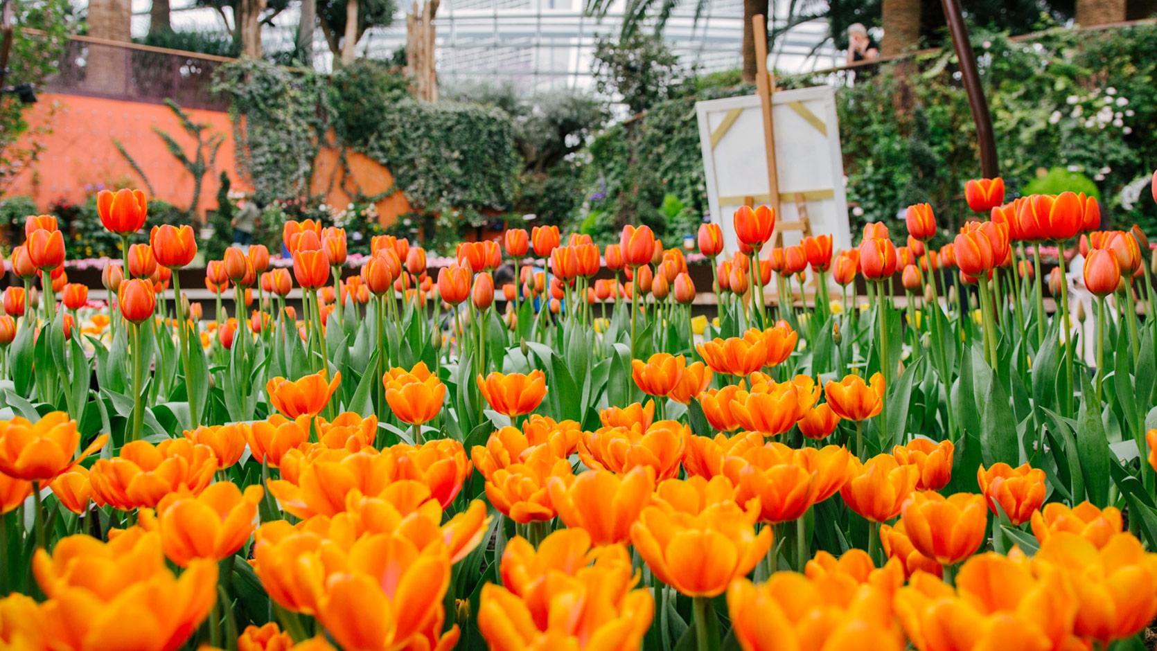 Tulipmania_carousel1-1670x940.jpg