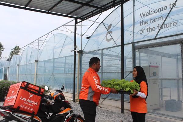 Lalamove helps urban farming company Cultiveat