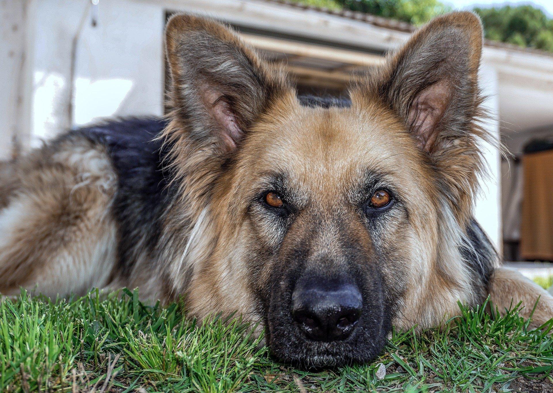 dog-3428575_1920
