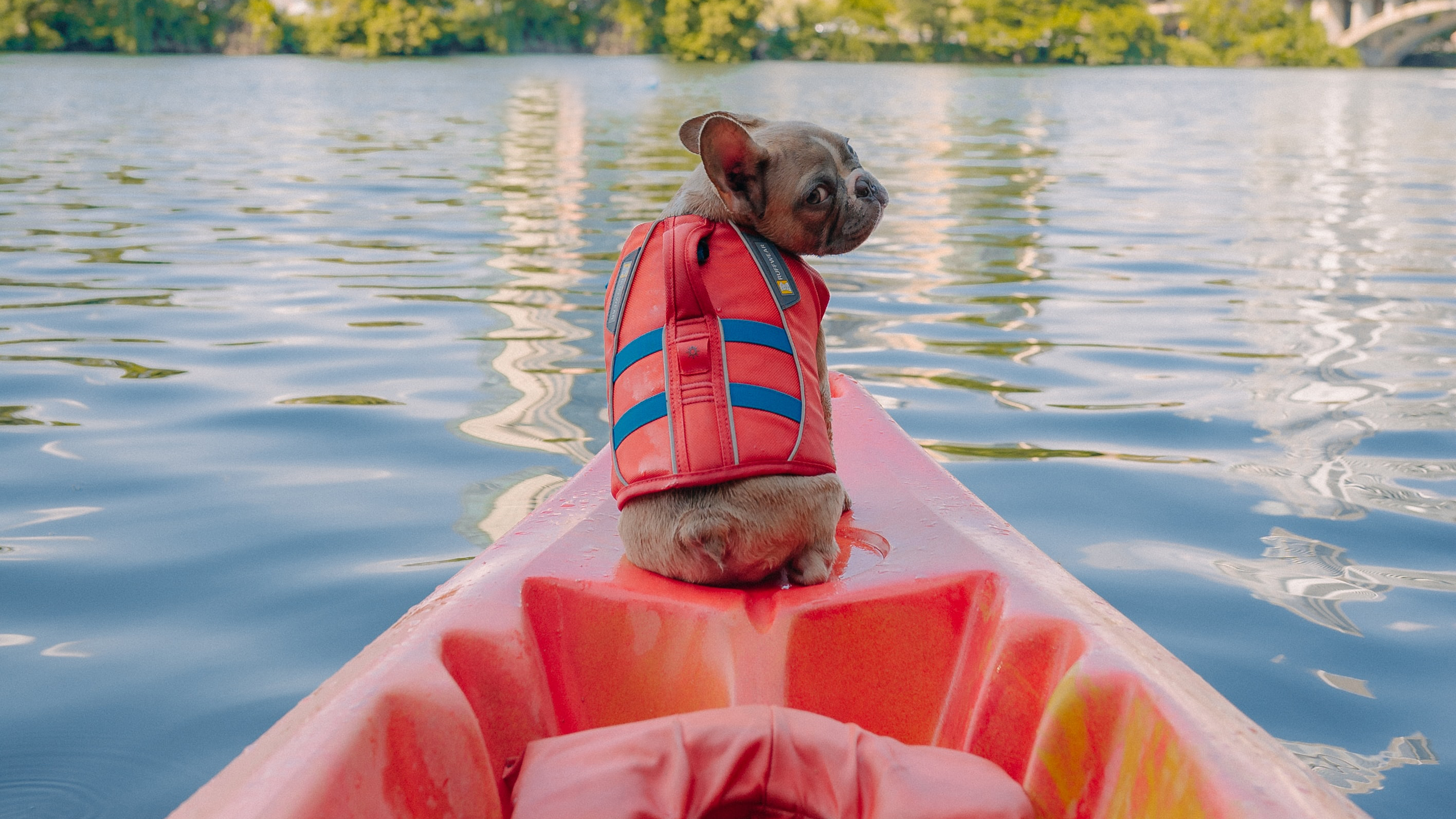 Small dog sitting at front of canoe looking back